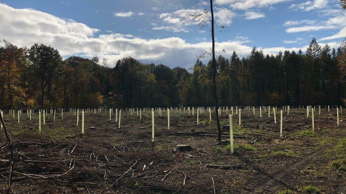 Baumpflanzaktion In Eschenbergen